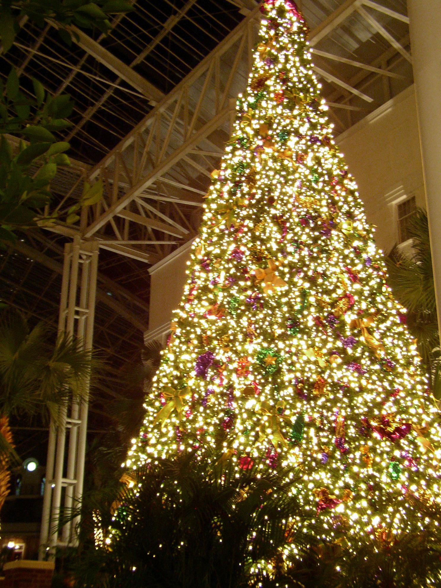 1488 1984 pixels christmas tree in opryland hotel
